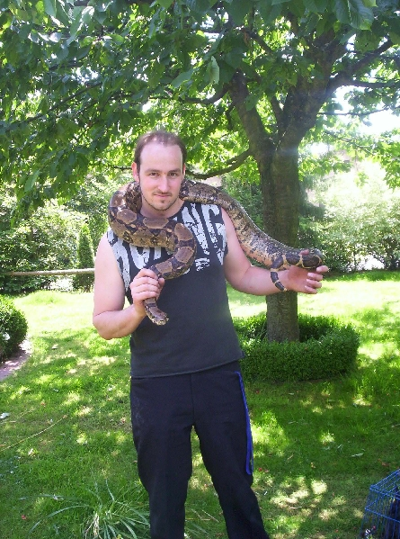 Boa Constrictor constrictor ID =
